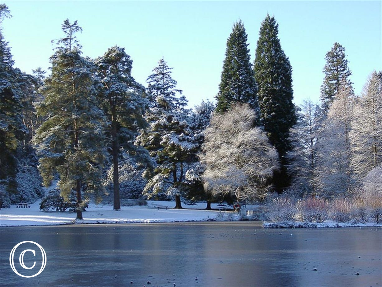 Bedgebury Pinetum in Winter