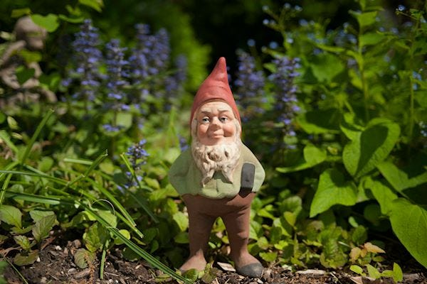 Gnome in a flowerbed