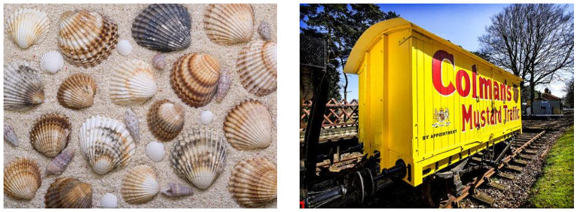 Shells | Coleman's Mustard Carriage